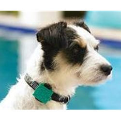 Safety Turtle pool alarm for pets is easy to pack and carry