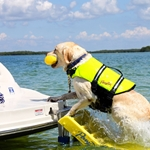 Pawz Pets Doggy Boat Ladder